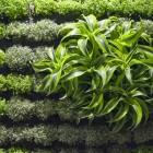 Green Plants Details Picture