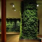 Indor Plant Walls Decoration