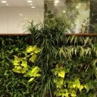 Plants Wall Office Decoration Ideas
