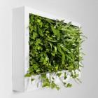 Portable Green Wall Design Ideas