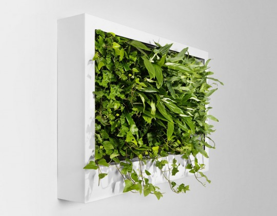 Portable Green Wall Design Ideas