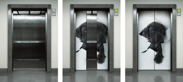 3D Dog Wall Sticker in Lift by Eazywallz