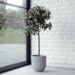 Interior Corner Plant with Brick Wall