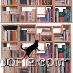 Functional Wooden Bookcase Cat Friendly Design Ideas