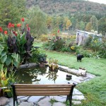 Home garden design plants